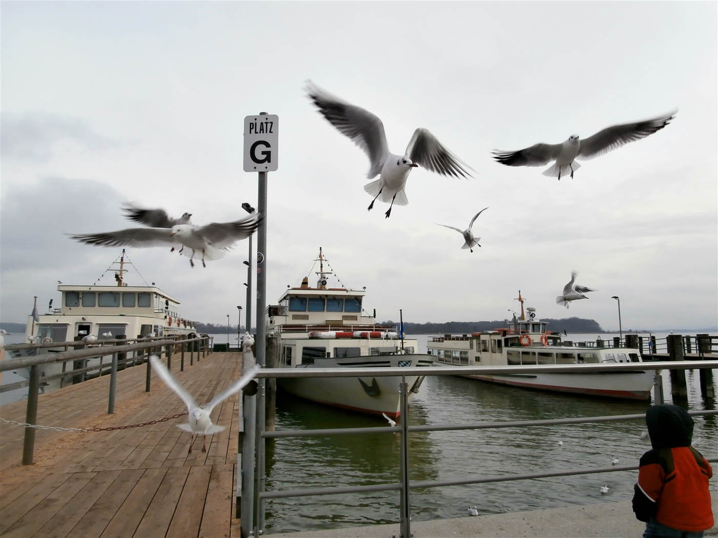 Sea Birds at Herrenchiemsee