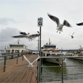 Sea Birds at Herrenchiemsee by William C.