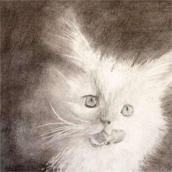 White Cat Face by Riley M.